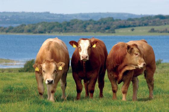 Duurzaamheid en dierenwelzijn de enige weg voor de Ieren